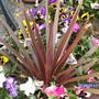 Garden_087