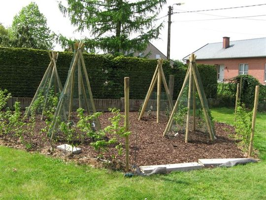 wigwams made for his children  by my neighbours' son (Rubus fruticosus ´Thornless Evergreen')