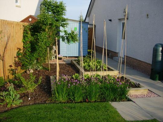 Vegetable Garden in Evening Sunshine
