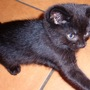 Nali....7_weeks_old..arrived_today_5th_june_10_028