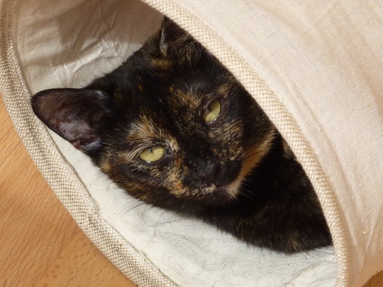 Stunning Sophie settled at last....