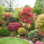 For amblealice's Acers from Fourseasons garden