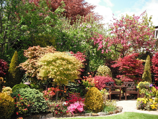 Acers For Amblealice from my Fourseasons blog