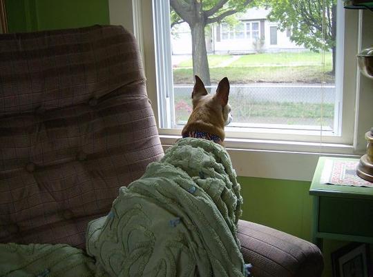 Maxi - Always on alert !