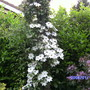 Garden_008