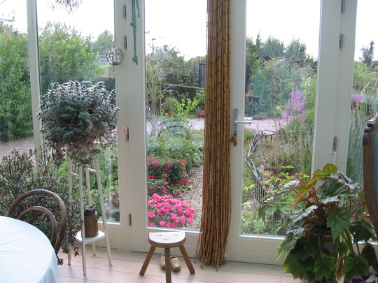 busy lizzies and fuchsia outside conservatory, and old milking stool for the grandchildren to sit on