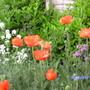 Garden_014