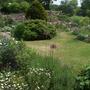 Part_of_front_garden