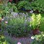 Upper_hopton_gardens_00026