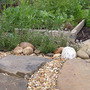 Our Thyme Bed and Gravel Path (Thymus vulgaris (Garden thyme))