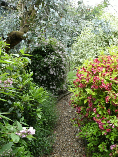 Pathway through the shrubs