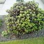 Garden_2010_044