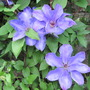 Garden2010_009
