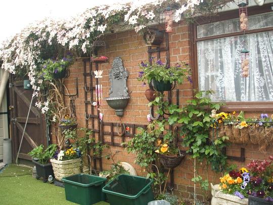 Back Yard (Roses)
