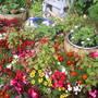 flower bed front garden
