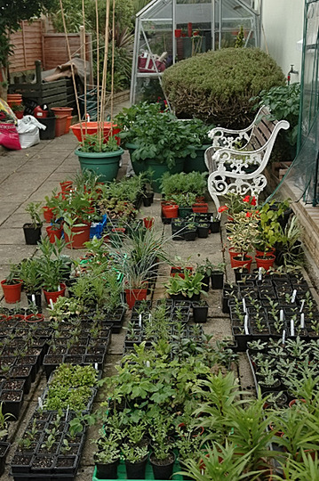Run out of room in the greenhouse!