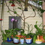 it&#x27;s summer and the orchids and epis are in the shade porch.