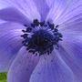 Rileys_flowers_2