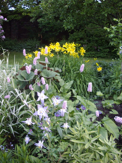 Day Lilies and Aquilegia (Aquilegia alpina)