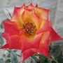 My flowers/Rozes