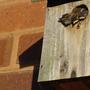 Wren chicks thinking of leaving the nest