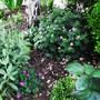 Geraniums 'Wargrave Pink' (I think) & G.Sanguineum