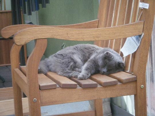 Nursery Cat, Petunia