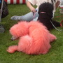 ive heard of pink elephants but pink poodles.........................