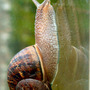 Snail & Reflection