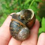 SNAILS GETTING INTIMATE lol
