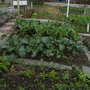 Allotment_034