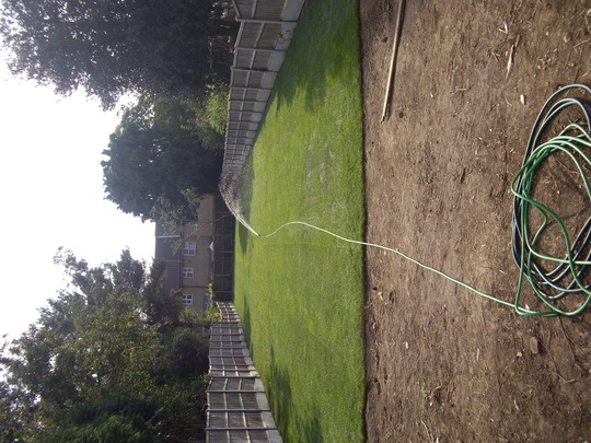 LET THERE BE GRASS !!