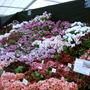 Malvern Spring Show 2008