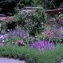 Mottisfont Roase Garden3