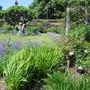 Mottisfont Rose Garden 4