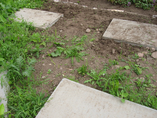 Area for greenhouse