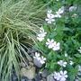 Grass_and_viola
