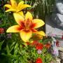 Garden_pics_2007_131