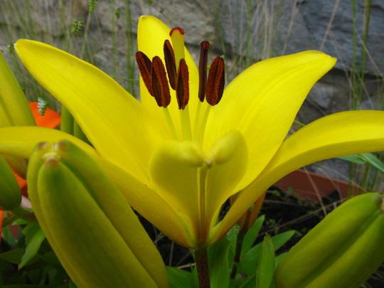 New Pollen take away opens