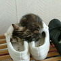 Tilly asleep in my slippers
