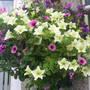 Garden_pics_2007_122