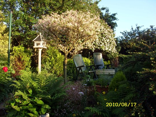 The sunlight on the garden