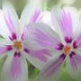 Pict0009_crop_blur