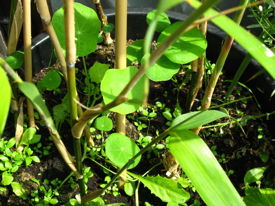 Whats this in my Bamboo pot?