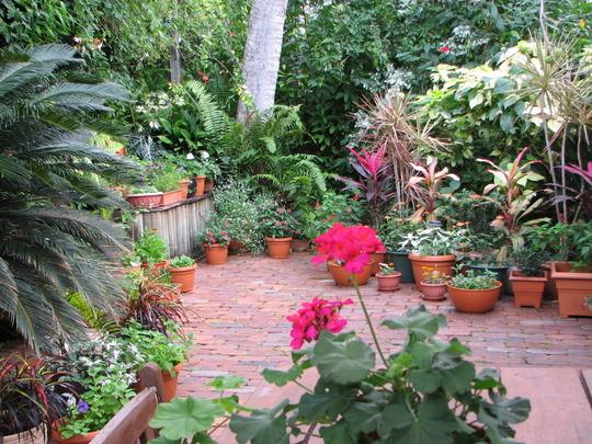 Early-Winter Downunder: in the Courtyard Garden