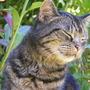 2009_0601cats0047