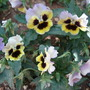 My garden flowers