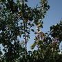 my tree's