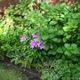 2010_Garden_008.jpg