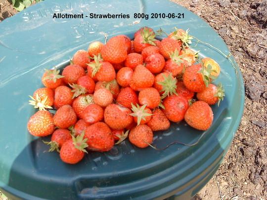 Strawberries picked on June 21st (Fragaria x ananassa (Garden strawberry))